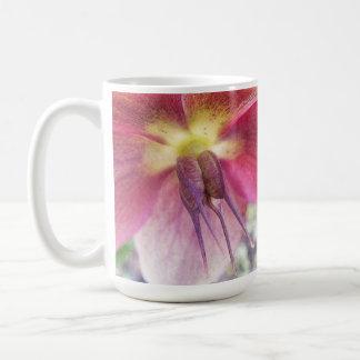 Vainas de la semilla que se convierten en la flor  taza