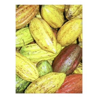 Vainas del cacao cojinete