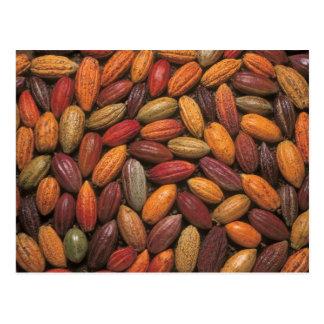 Vainas del cacao tarjetas postales