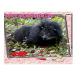 val-bearcat-00085-6x4 postal