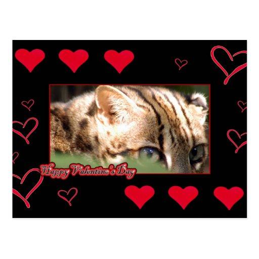 val-bengal-cat-00021-6x4 postales