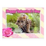 val-bengal-cat-00033-65x45 tarjetas postales