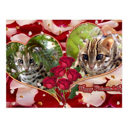 val-bengal-cat-00128-6x4 postales
