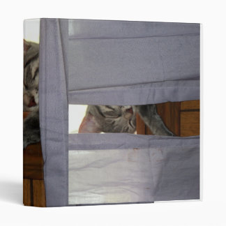 Val the super cat, asleep in the window 3 ring binder