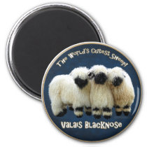 Valais Blacknose - The World's Cutest Sheep! Magnet