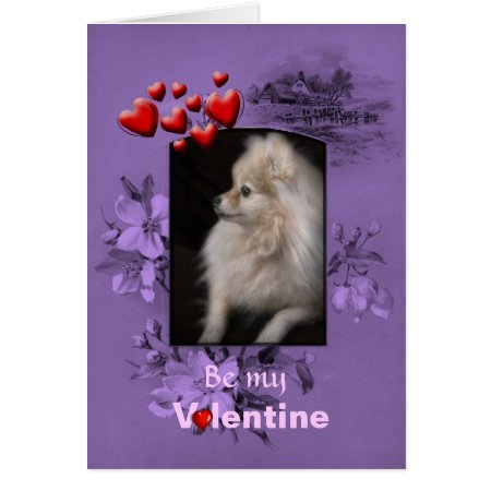 Valentine Adorably Cute Pomeranian Puppy Card