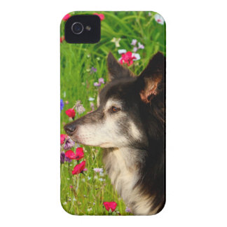 Valentine Border Collie with beautiful flowers iPhone 4 Case