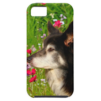 Valentine Border Collie with beautiful flowers iPhone SE/5/5s Case