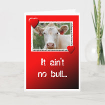 Valentine Cow Holiday Card