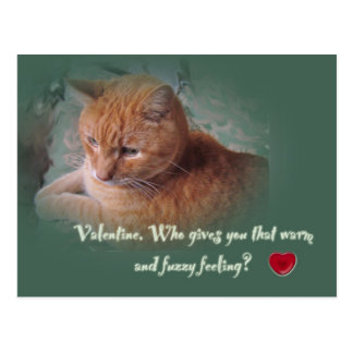 Valentine From the Cat Postcard