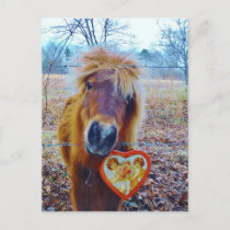 Valentine Heart  Horse Holiday Postcard