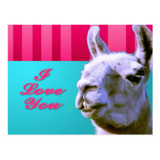 Valentine llama I love you be mine pink red, turqu Postcard