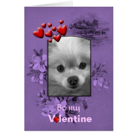 Valentine Pomeranian with Big Cute Eyes Card