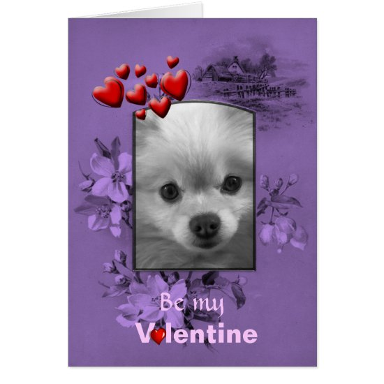 Valentine Pomeranian with Big Cute Eyes Card