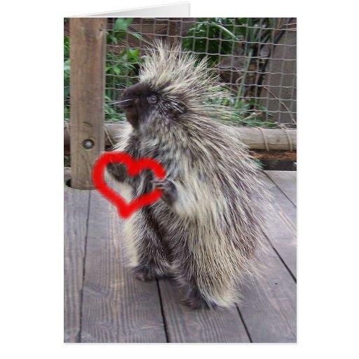 Valentine Porcupine Greeting Card