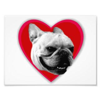 Valentine s French Bulldog Photo