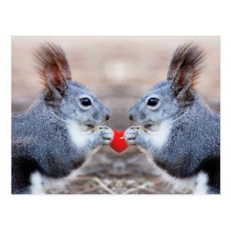 Valentine Squirrels Postcard