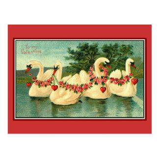 Valentine Swans Postcard