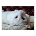 Valentine Turkish Angora Cat Odd Eyes Card