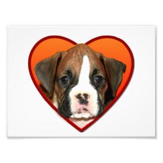 Valentine's boxer puppy photo print
