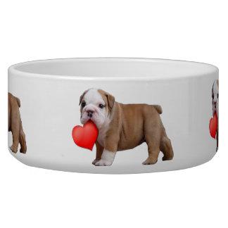 Valentine's bulldog puppy bowl