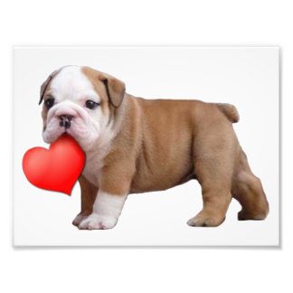 Valentine's bulldog puppy photo print