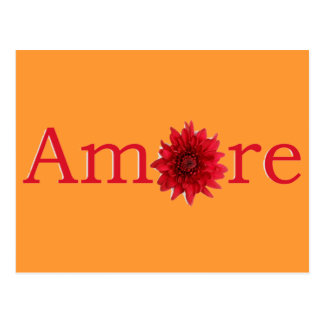 """Valentine's Day """"Amore"""" with red daisy Postcard"""