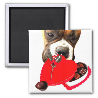 Valentine's Day Boxer with chocolates magnet