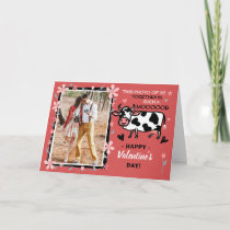 Valentine's Day Cute Cow Custom Couple Photo Funny Card