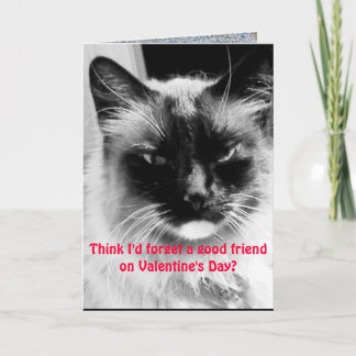 Valentine's Day Funny Cat for Friends Holiday Card