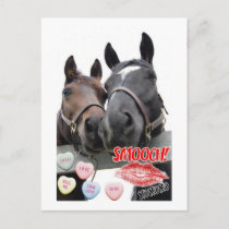 Valentine's Day Horses Holiday Postcard
