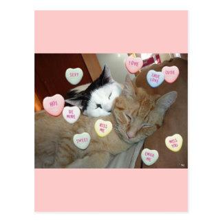 Valentine's Day Kittens Postcard