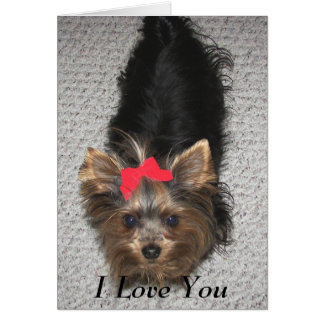 Valentines Day- Yorkie I love you Cards