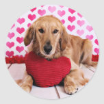Valentines - Golden Retriever - JJ Stickers