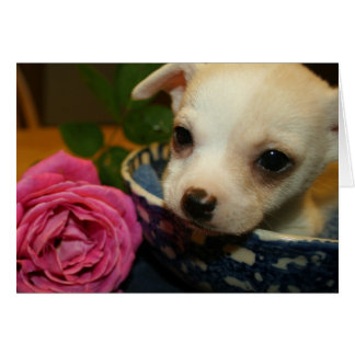 Valentines Love Card Baby Chihuahua Puppy Rose