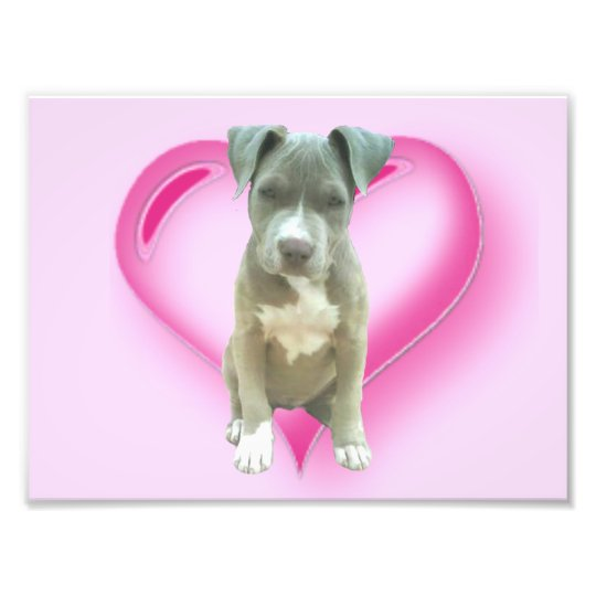 Valentines Pitbull puppy Photo Print