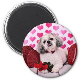 Valentines - Shih Tzu - Teddy Fridge Magnets