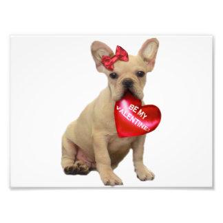 Valentin's French Bulldog puppy Art Photo