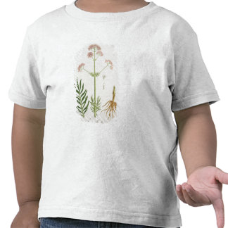 Valerian from 'Phytographie Medicale' by Joseph Ro Shirt