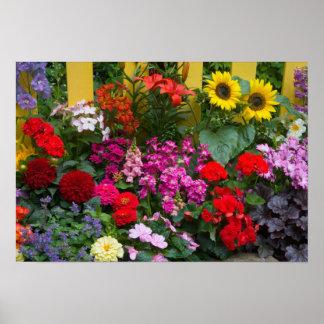 Valla de estacas amarilla con el jardín de flores  póster