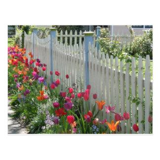 Valla de estacas blanca con la postal de los tulip