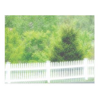 valla de estacas y árboles blancos postales