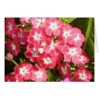 Valle de Badrinath de las flores 1 Felicitacion