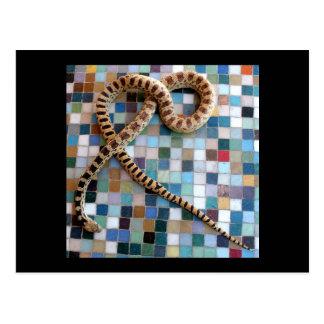 Valle de la maravilla de la serpiente de Gopher Tarjetas Postales