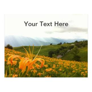 Valle de oro de la flor del Daylily Postales