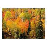 Valle del follaje de otoño felicitaciones