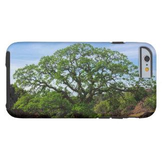 Valley Oak Tree Tough iPhone 6 Case