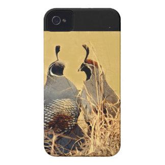 Valley Quail (California) Case-Mate iPhone 4 Case