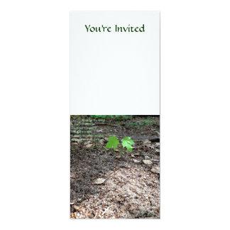 """Valor de un árbol joven invitación 4"""" x 9.25"""""""