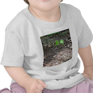 Valor de un árbol joven camiseta